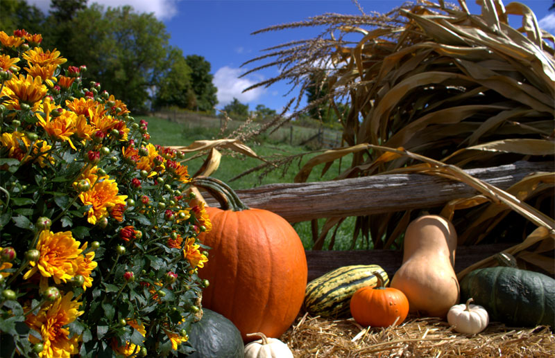 Fruits and Vegetables to Harvest in September ...or later