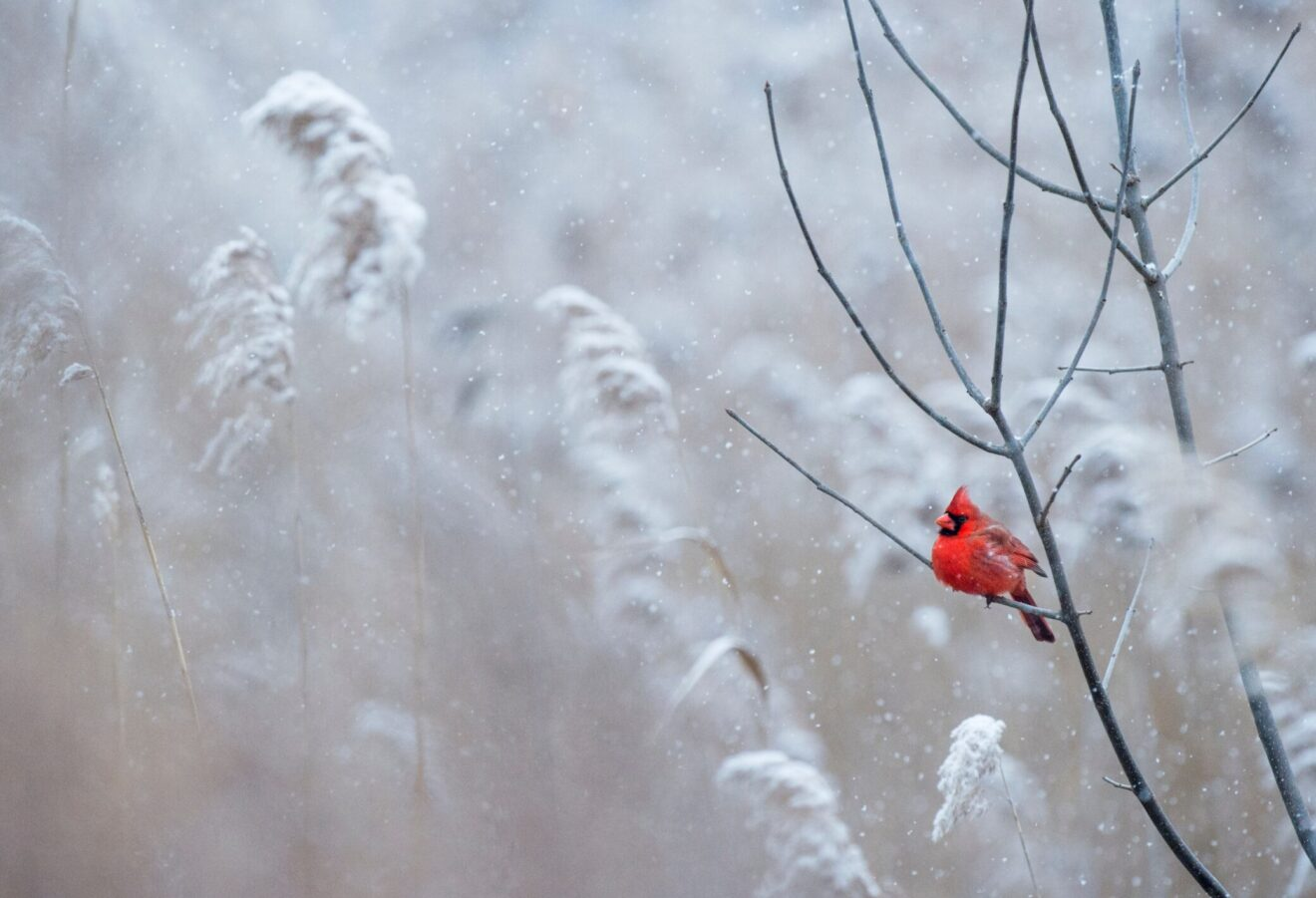 Give Birds water in winter