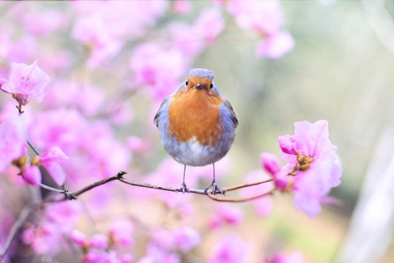 spring brings hope